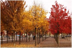 Herbst-in-Berlin-dreifarbig