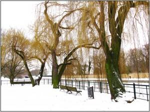 Winter-an-der-Spree